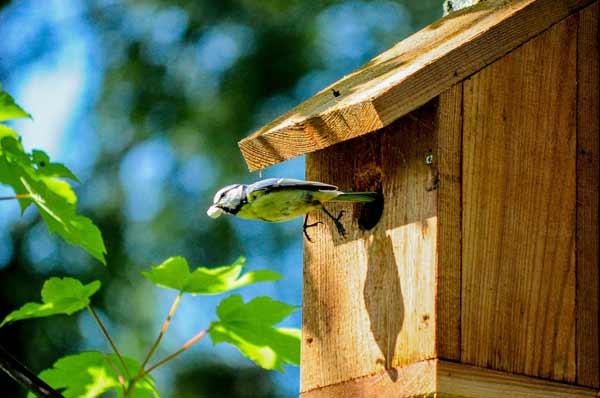 uccellino-nido-600-x-400