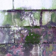 Infiltrazione di umidità nei muri